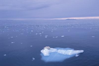 oso-polar.jpg