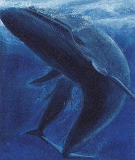 ballena azuljpg