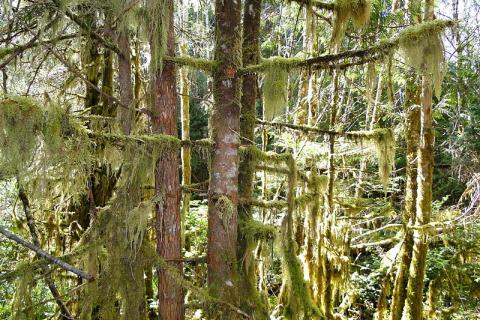 bosque-canada.jpg